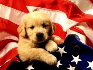 5-8952-blog-le-chien-le-meilleur-amis-de-l-homme