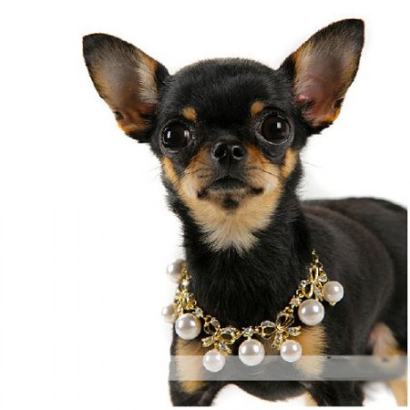 Collier bijou pour chien