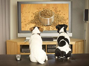Dog-TV-01