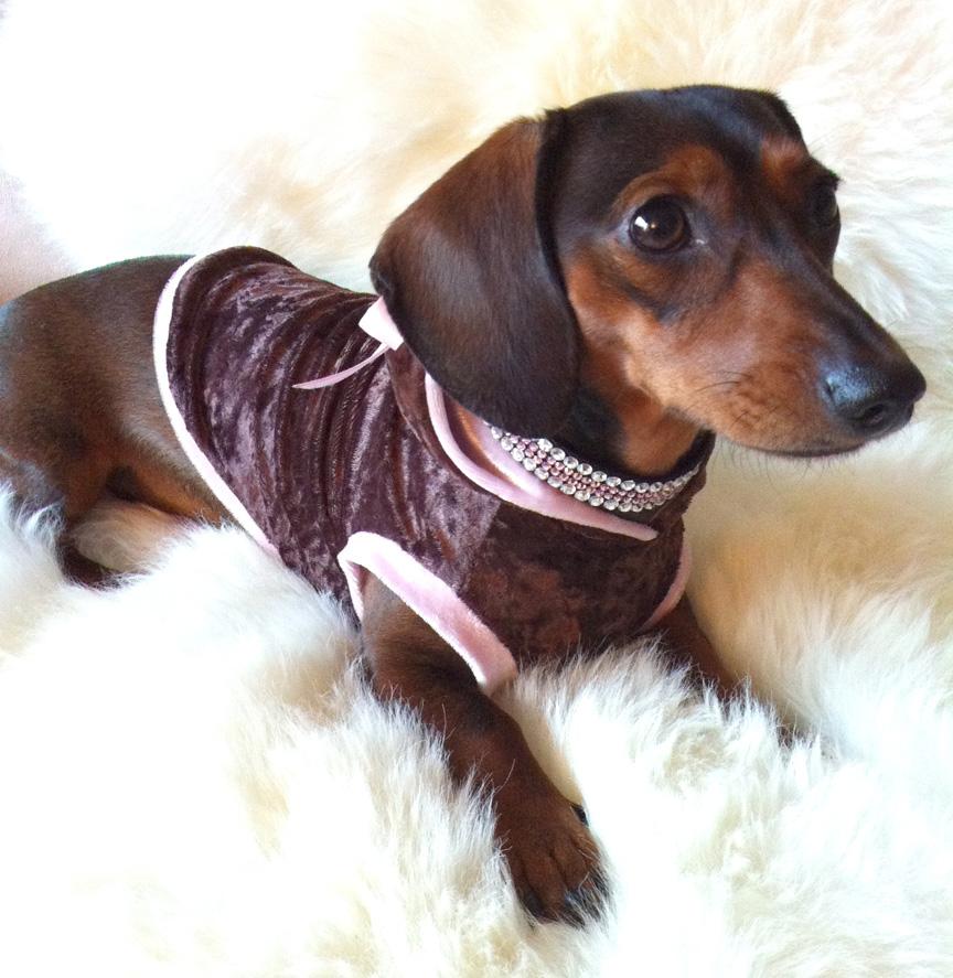 La Haute couture pour chiens arrive !