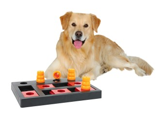 Jeu_de_strat_gie_Dog_Activity_Chess_pour_chiens_2