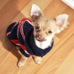pull-chien-union-jack-british-mode-original-pour-cadeau-anniversaire-noel-fete-livraison-offerte-gueule-d-amour[1]
