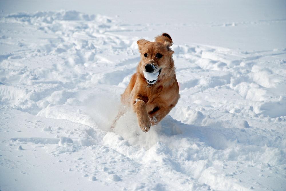 Partir en vacances au ski avec son chien thefashiondog for Hotels qui acceptent les chiens