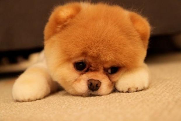 Préférence BOO, buzz sur le chien le plus mignon ! – Thefashiondog EW48
