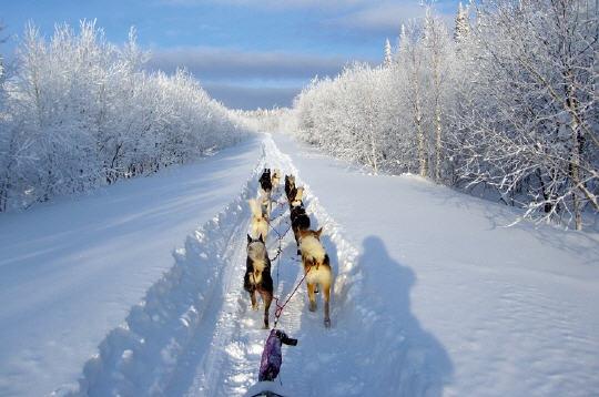 Id es pour vos vacances aux sports d hivers la balade en for Balade chien de traineau doubs