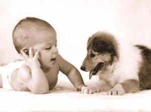 bebe-chien-arrivee-conseil-comportement