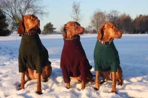 Vizlas in snow